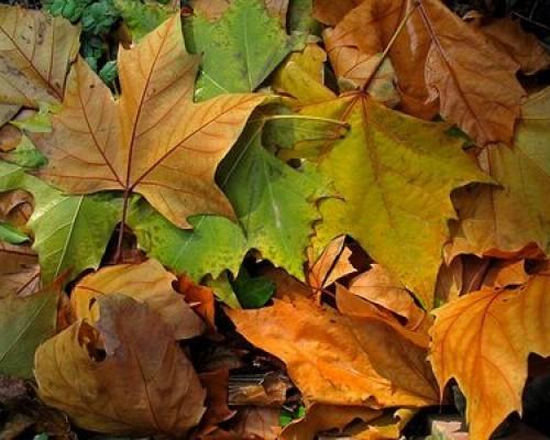Resultado de imagen de imagenes de hojas de otoño